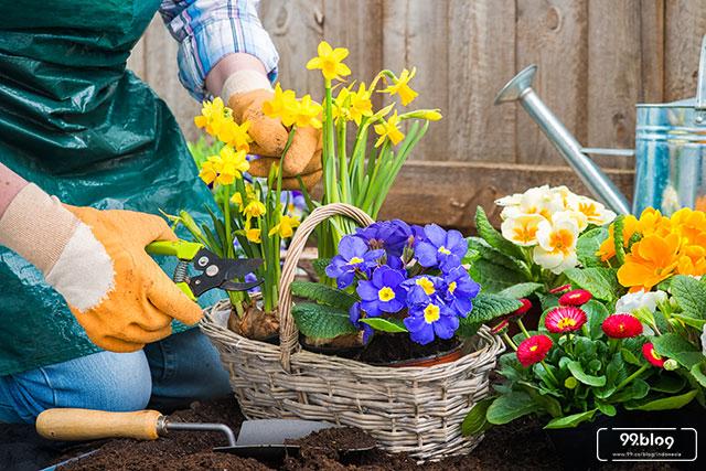 cara menanam bunga