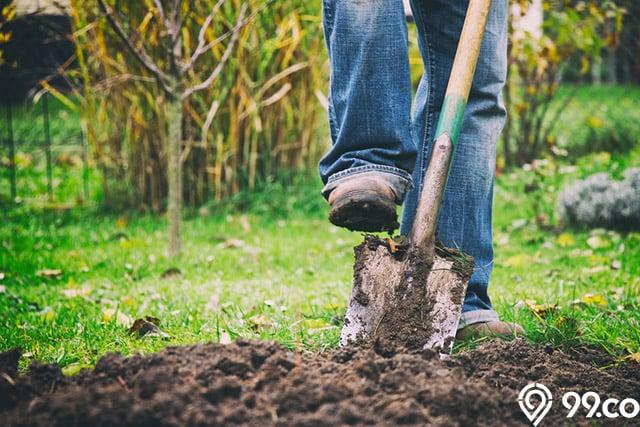 penggemburan tanah