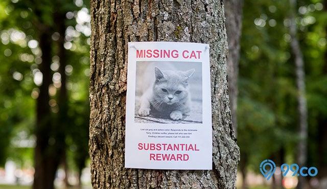 7 Cara Mencari Kucing Hilang dengan Cepat. Dilengkapi Alasan Si Manis Pergi!