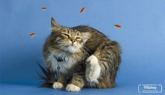 cara mengusir kutu kucing