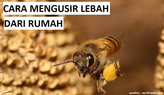 cara mengusir lebah