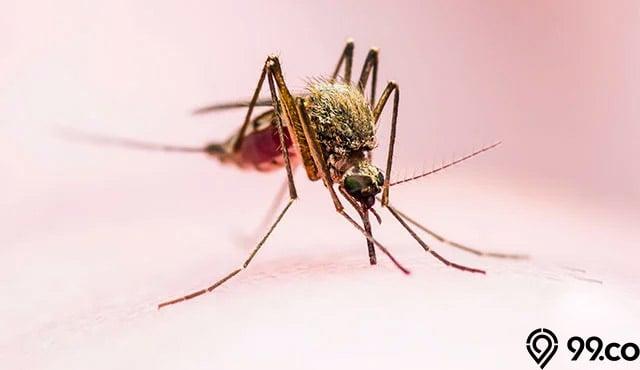 Cara Mengusir Nyamuk dari Rumah Secara Alami dan Efektif