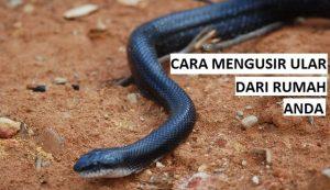 cara mengusir ular tanpa pawang