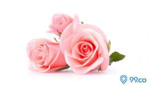 cara merawat bunga mawar