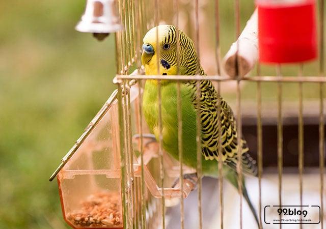 45+ Gambar Hewan Burung Jaman Dulu Terbaik