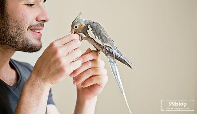cara merawat burung