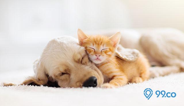 Gambar Ilustrasi Tema Hewan Kesayangan Kucing Cara Merawat Hewan Peliharaan Di Rumah Mulai Dari Kucing Hingga Ikan