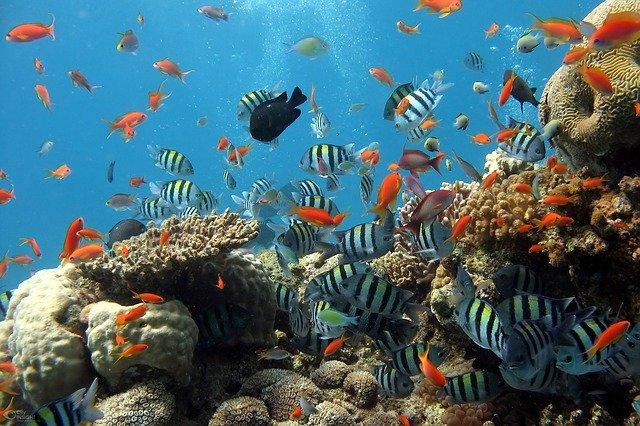 cara mengurus ikan hias di akuarium