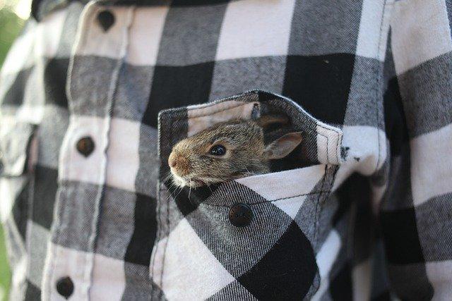 cara merawat kelinci di rumah