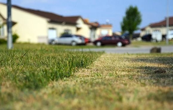 rumput halaman