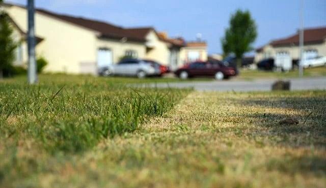 Tidak Cuma Disiram, Ini 6 Cara Merawat Rumput Agar Tetap Hijau Segar