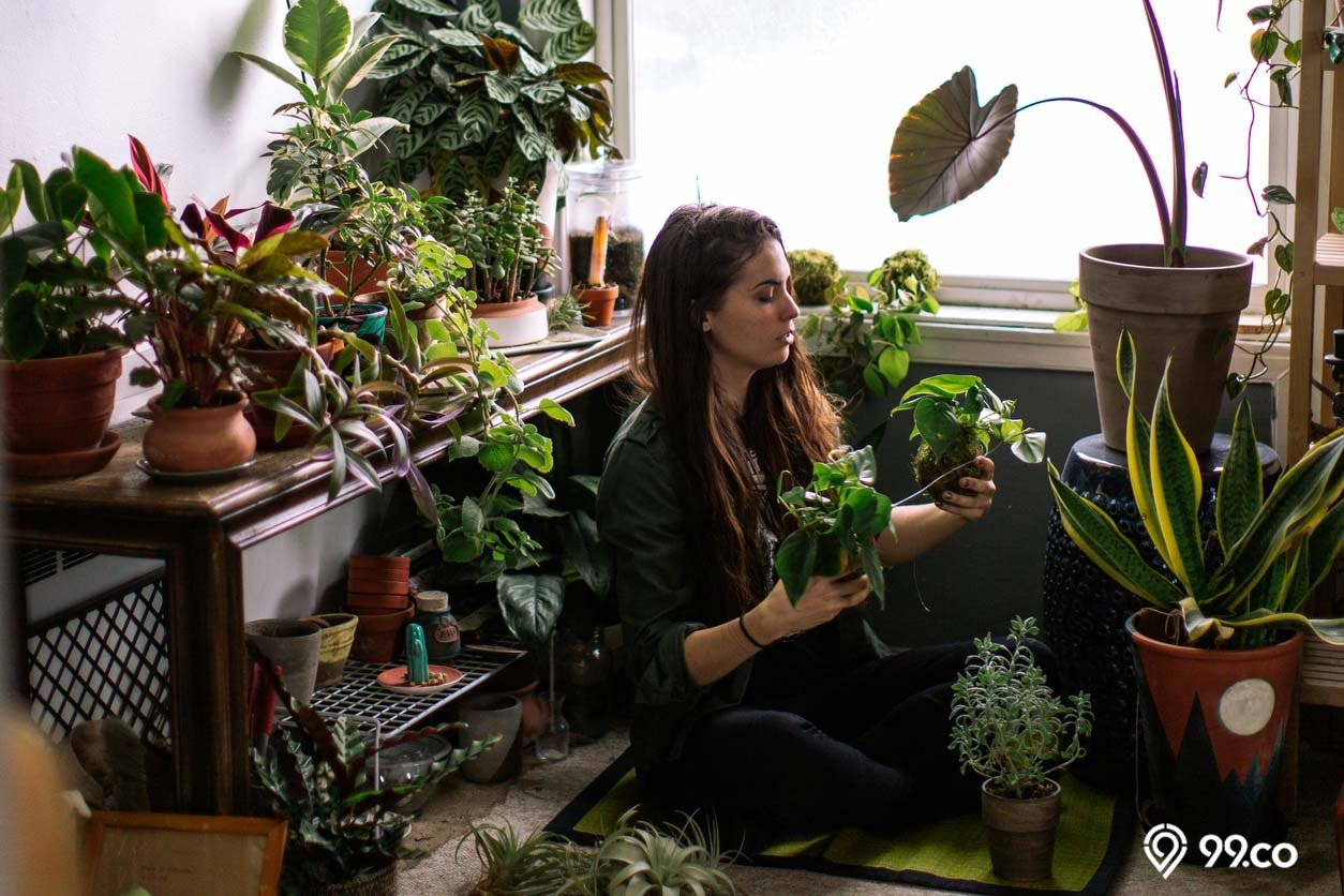 7 Cara Merawat Tanaman Hias Indoor Mudah & Efektif agar Tumbuh Subur