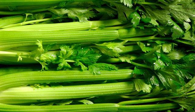 tanaman aromaterapi