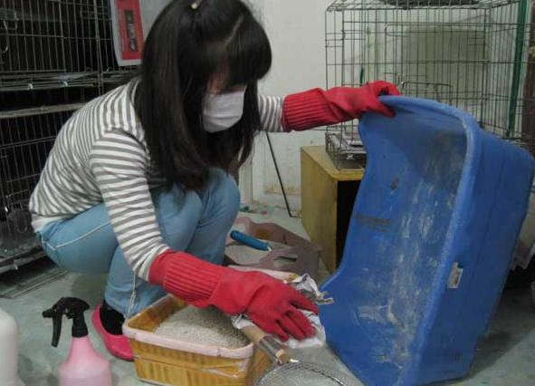 Cara Membasmi Kutu Kucing yang Berkeliaran di Ruangan Rumah