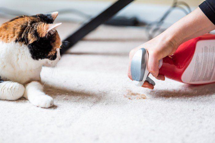 Membersihkan Kotoran Untuk Kucing