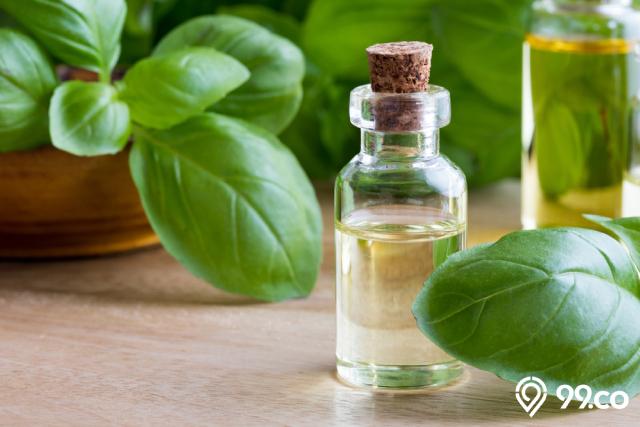 minyak daun basil