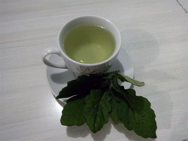 teh daun dewa