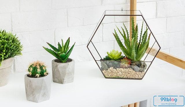 dekorasi terrarium