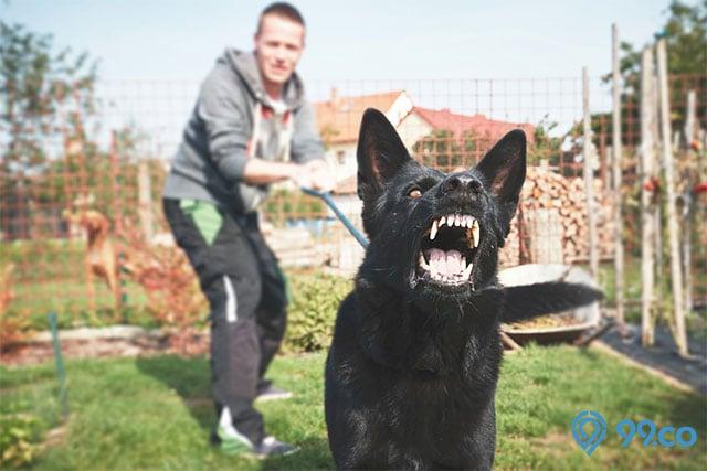 mimpi dikejar anjing hitam