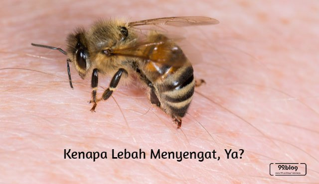 kenapa disengat lebah