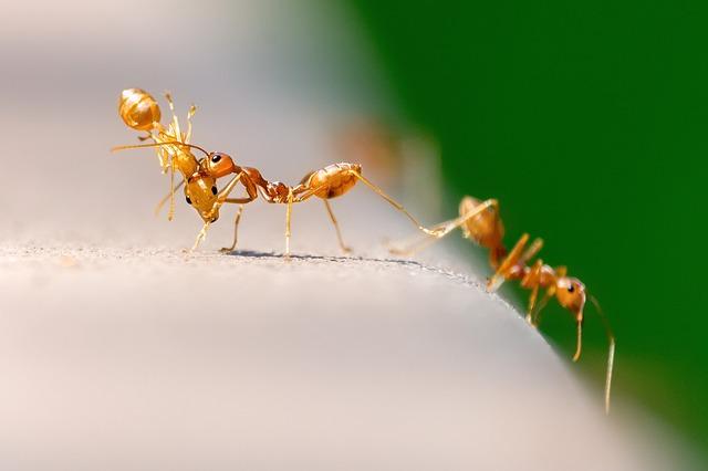doa mengusir semut