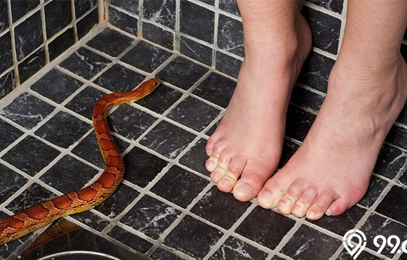 doa mengusir ular