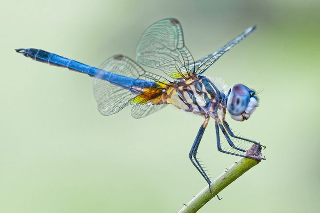 serangga bermanfaat