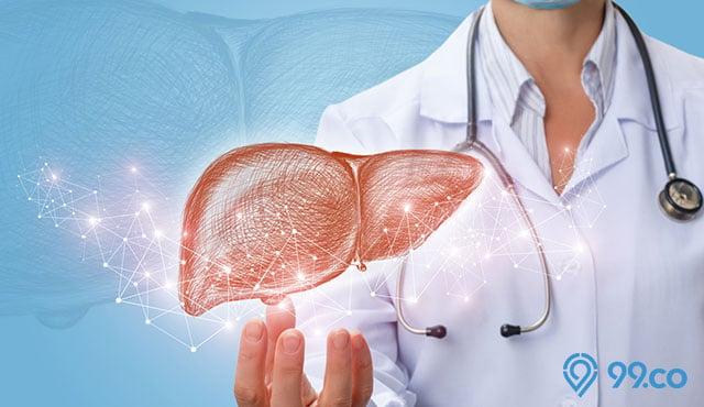 organ hari manusia