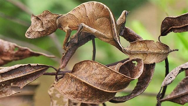 gambar kamuflase hewan