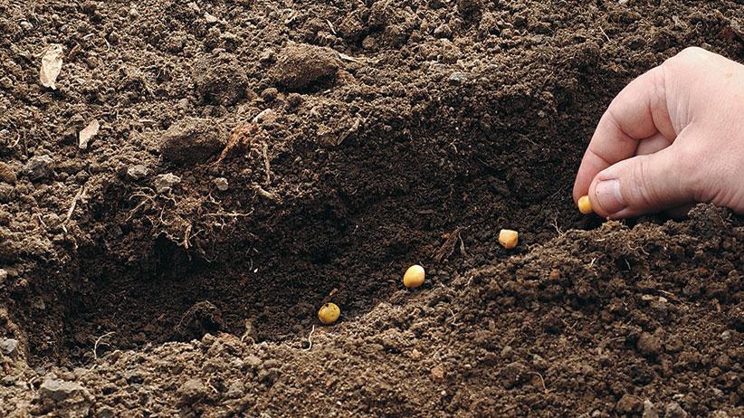 lahan tanaman
