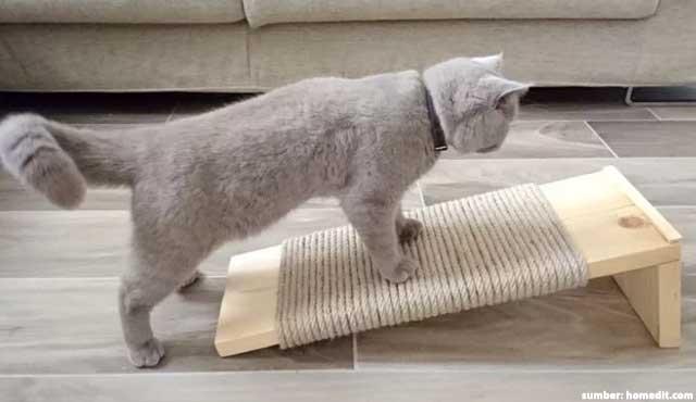 Garukan Kucing Ada Manfaatnya, Lho. Coba Bikin, Yuk!