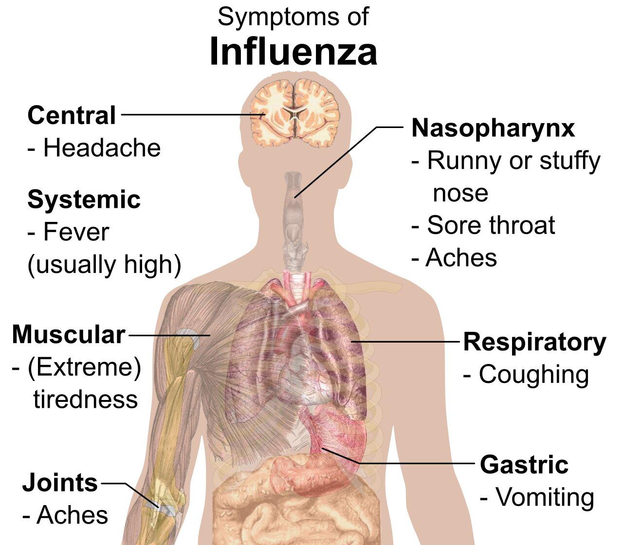 perbedaan penyakit flu dan pilek