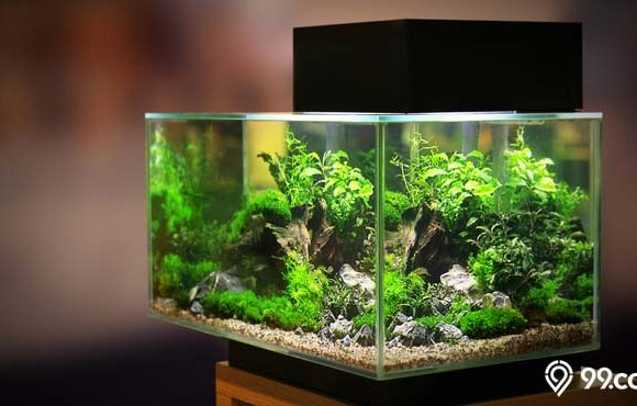 daftar harga aquarium