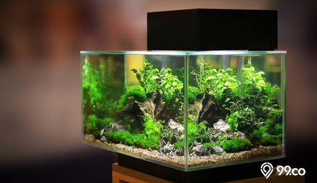 Daftar Harga Aquarium Beragam Jenis dan Ukuran | Mulai dari Rp30 Ribu sampai Rp39 Juta!