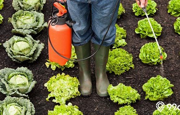 insektisida sayuran