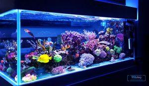 hiasan aquarium