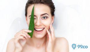 manfaat lidah buaya untuk wajah