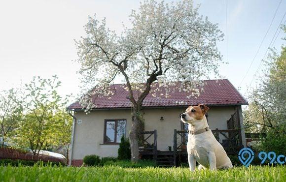 mimpi anjing masuk rumah