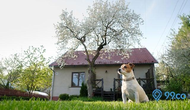 11 Arti Mimpi Anjing Masuk Rumah Menurut Islam & Primbon. Bawa Keberuntungan atau Kesialan, Ya?