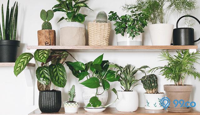 7 Inspirasi Desain Rak Tanaman Hias. Bikin Tumbuhan Terlihat Makin Cantik!