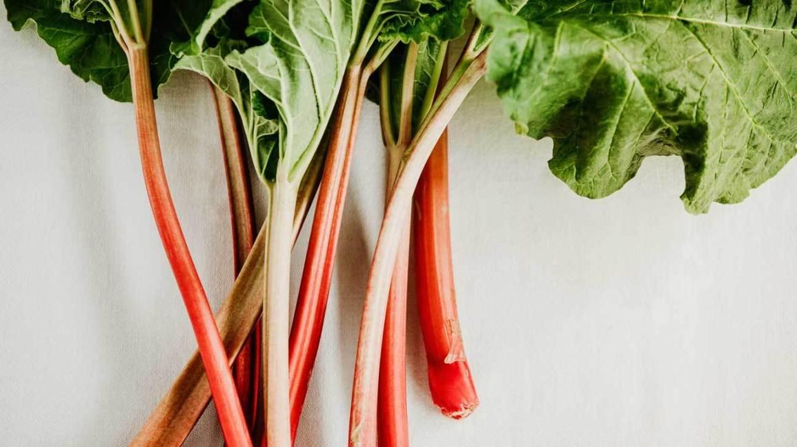 sayur rhubarb