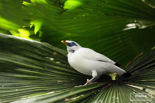 88 Gambar Hewan Langka Burung Cendrawasih Gratis Terbaru