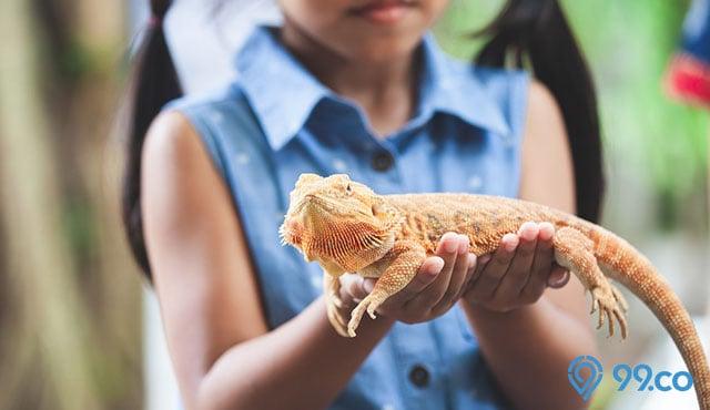11 Hewan Reptil Ini Bisa Dipelihara di Rumah. Menggemaskan!