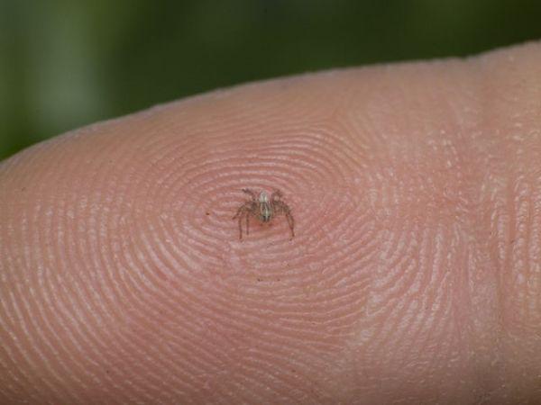hewan terkecil di dunia