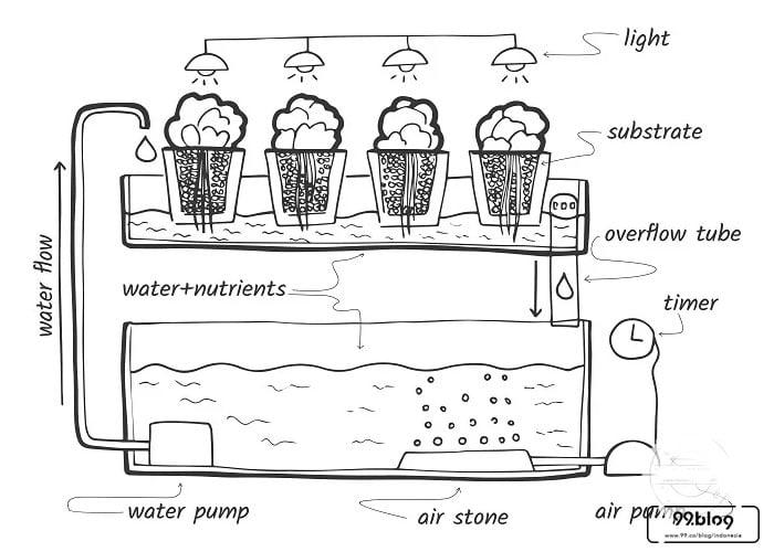 teknik hidroponik