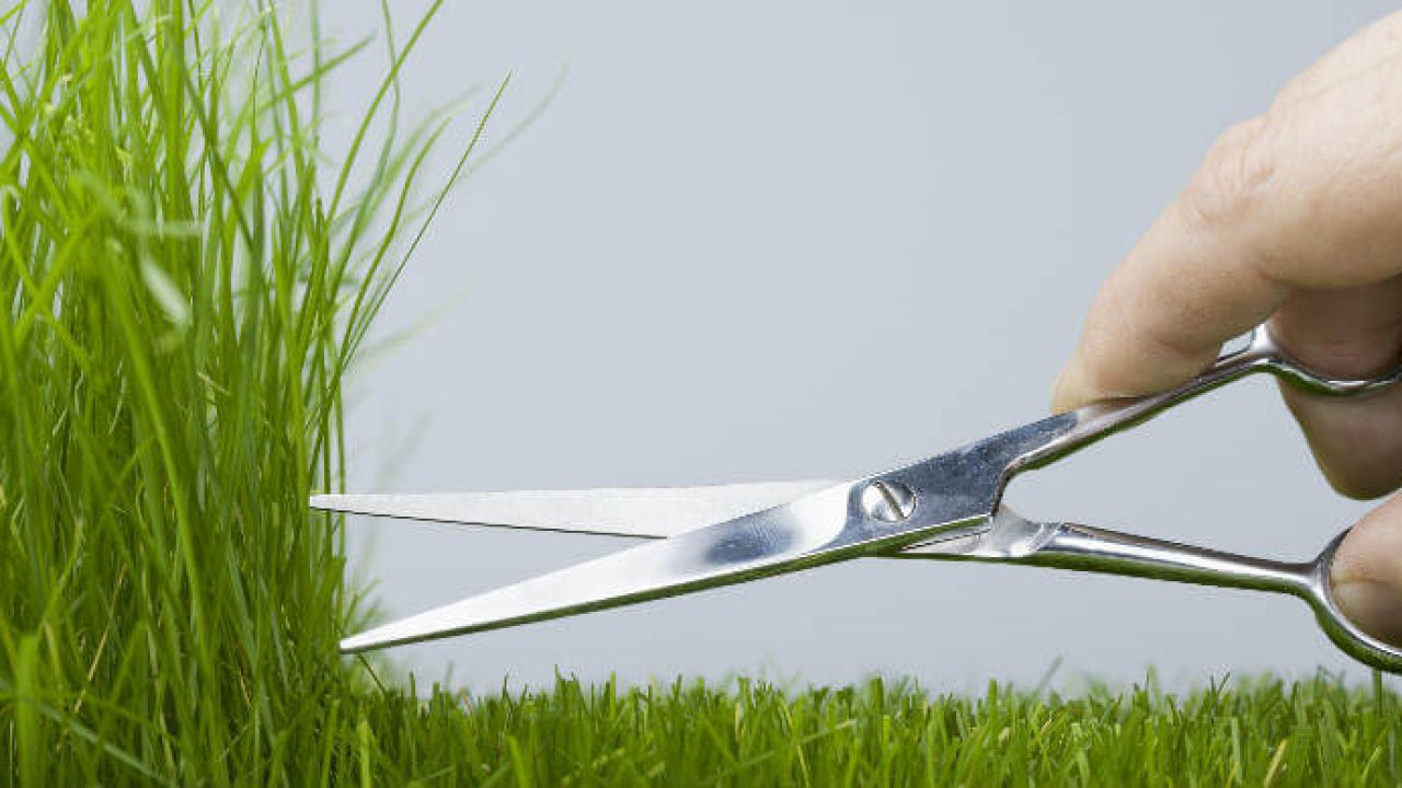 potong rumput