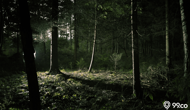 6 Hutan Angker di Indonesia yang Diselimuti Cerita Misteri. Berani ke Sini?