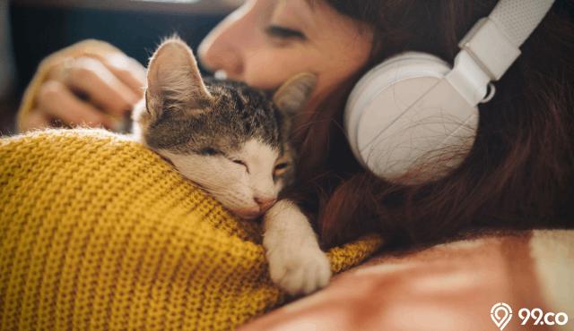 10 Jenis Kucing Terpopuler Untuk Dipelihara Dan Teman Main Di Rumah