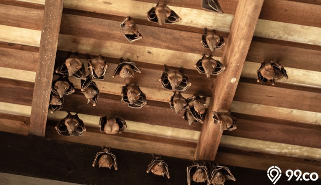 Tidak Disangka, Ini 5 Arti Kelelawar Masuk Rumah! Hoax atau Fakta?