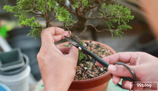 Cara Membuat Tanaman Bonsai Miniatur Pohon Yang Filosofis
